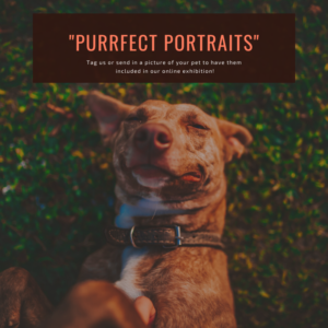 "A picture of a dog in grass reading ""purrfect portraits"" requesting pet pictures"